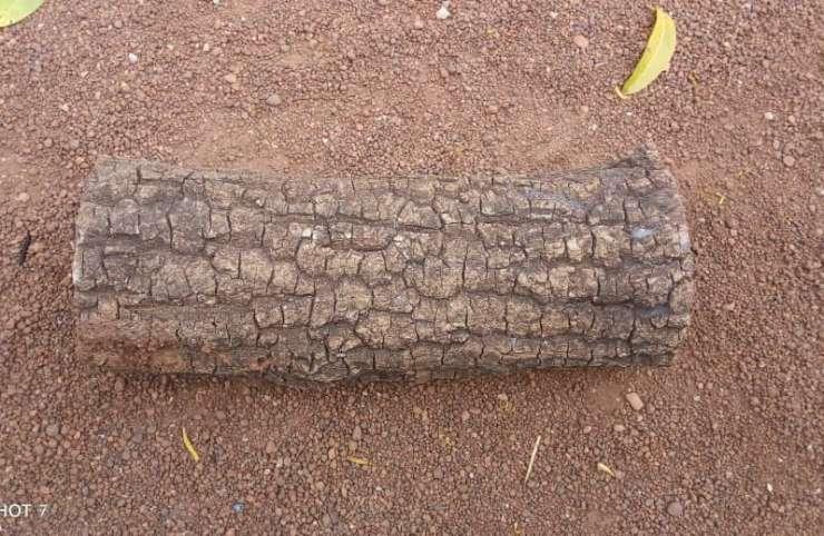 Tradition : le rôle du tronc d'arbre chez les Sénoufos