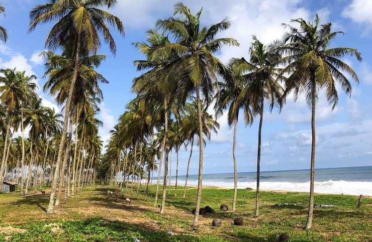 Environnement : Comment la Côte d'Ivoire protège son littoral ?