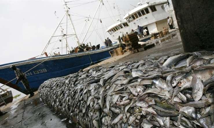 Côte d'Ivoire : Comment les zones de pêches sont surexploitées