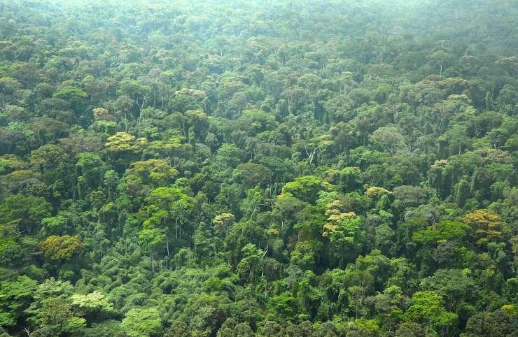 COP 26 : Comment la Côte d'Ivoire se prépare